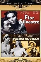 Image of Flor silvestre