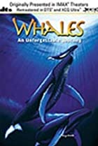 Image of Whales: An Unforgettable Journey