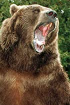 Image of Bart the Bear