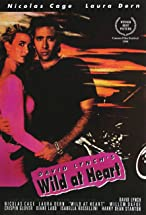 Primary image for Wild at Heart