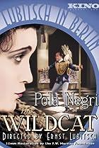 Image of The Wildcat