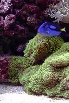 Image of How It's Made: Space Pens, Reef Aquariums, Metal Caskets, Composite Bike Wheels