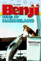 Image of Benji Takes a Dive at Marineland