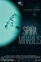 Image of Spira Mirabilis