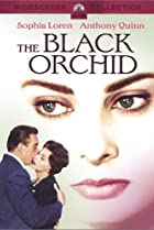 Image of The Black Orchid