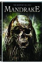 Image of Mandrake