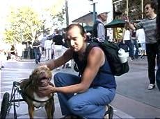 Diva Dog: Pit Bull on Wheels