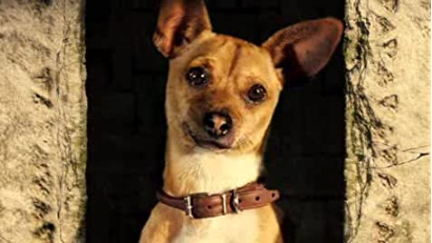 Beverly Hills Chihuahua 2 Cast | www.pixshark.com - Images ...