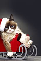 Image of Grumpy Cat's Worst Christmas Ever