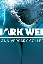 Shark Attack Survivors Poster