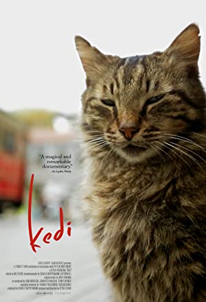 Picture of Kedi
