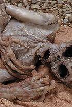 Image of The X-Files: Anasazi