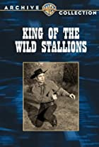 Image of King of the Wild Stallions