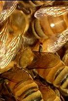 Image of How It's Made: Honey/Fibre-Optics/Bricks/Pipe Organs
