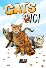 Cats 101 Poster