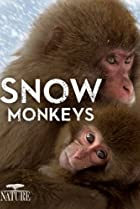 Image of Nature: Snow Monkeys