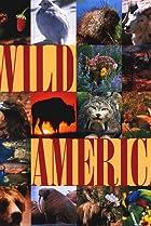 Image of Wild America