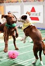 Puppy Bowl XI