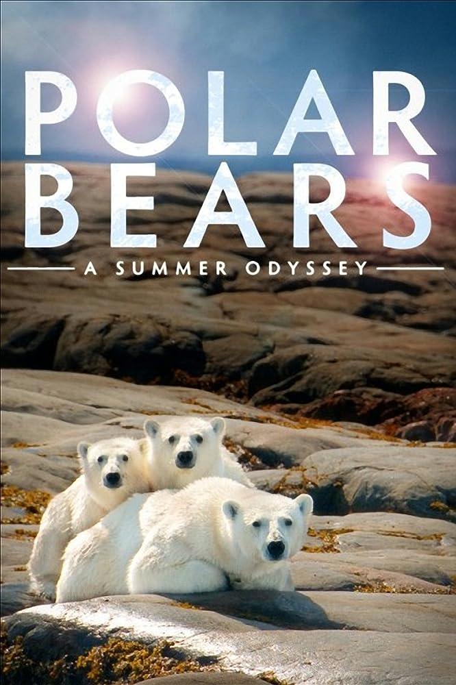 Polar Bears: A Summer Odyssey