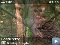 Kraljevstvo macaca online dating