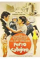 Image of Perro callejero
