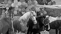Horse Party