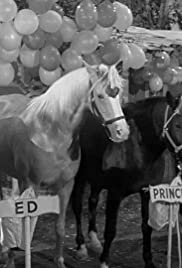 Horse Party Poster