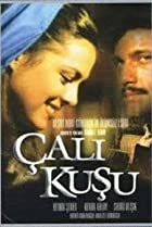 Image of Çalikusu