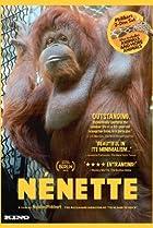 Image of Nénette
