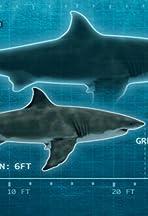 Shark of Darkness: Wrath of Submarine