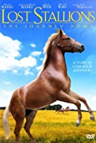 Image of Lost Stallions: The Journey Home