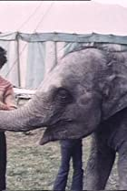 Image of Anoop and the Elephant