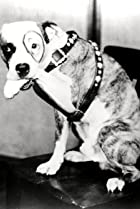 Image of Pete the Dog