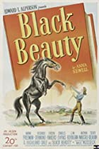 Image of Black Beauty