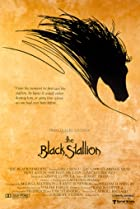 Image of The Black Stallion
