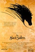Primary image for The Black Stallion