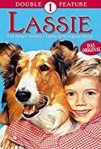 Primary image for Lassie: A New Beginning