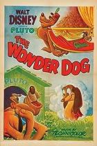 Image of Wonder Dog
