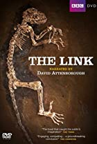 Image of Uncovering Our Earliest Ancestor: The Link