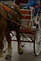 Image of How It's Made: Horse-drawn Carriages/Artificial Eyes/Dog Food and Cat Food/Mirrors