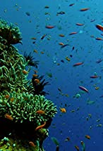 Primary image for Reef to Rainforest