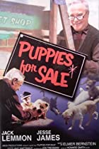 Image of Puppies for Sale