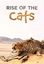 Cats: An Amazing Animal Family