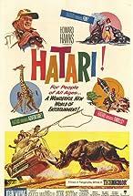 Primary image for Hatari!