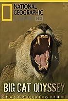 Image of Big Cat Odyssey