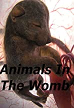Animals in the Womb