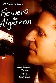 Flowers for Algernon(2000) Poster - Movie Forum, Cast, Reviews