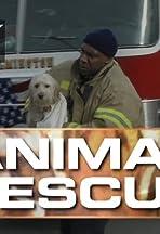 Animal Rescue with Alex Paen