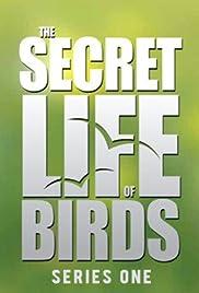 The Secret Life of Birds Poster