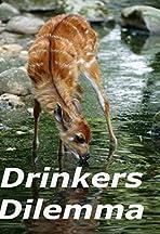 Drinker's Dilemma